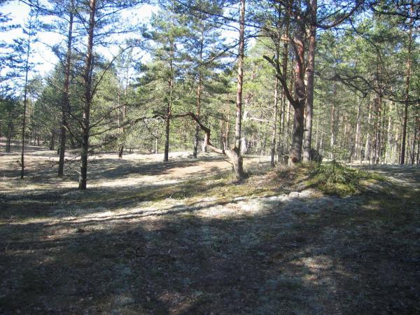 как взять в аренду земли лесхоза появилась